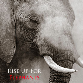 Rise Up For Elephants